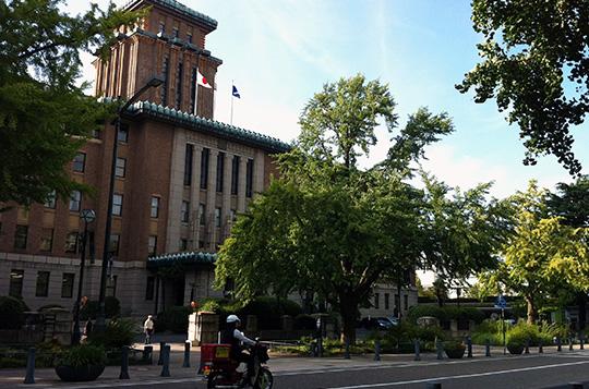 神奈川県庁前(通称キング)日本大通りの銀杏並木